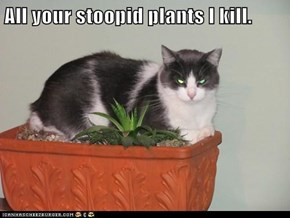 All your stoopid plants I kill.
