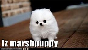 Iz marshpuppy