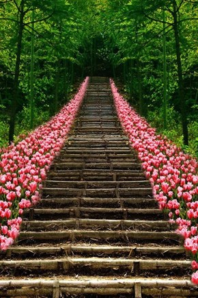 Tulip Stairs, Kyoto, Japan