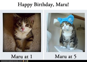Happy Birthday, Maru!
