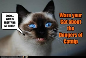 Warn your Cat about the Dangers of Catnip