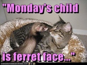 """Monday's child  is ferret face..."""