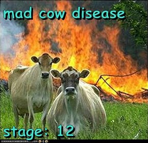 mad cow disease  stage: 12