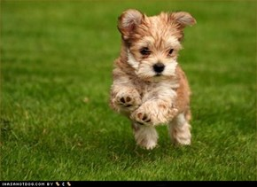 Cyoot Puppy ob teh Day: Jumping For Joy!