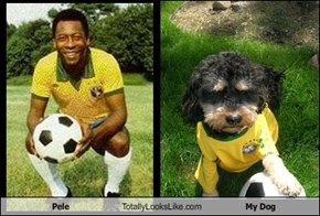 Pele Totally Looks Like My Dog