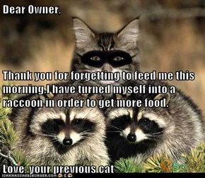 Dear Owner, Thank you for forgetting to feed me this morning.I have turned myself into a raccoon in order to get more food. Love, your previous cat