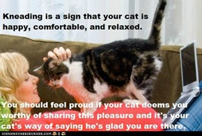 Fun Cat Facts #84