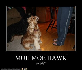 MUH MOE HAWK