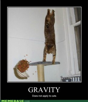 Gravity Does Not Apply to Cats