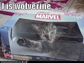 I is wolverine