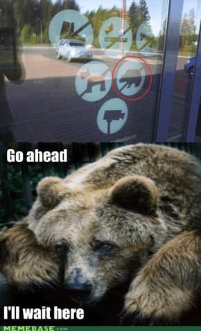 Bears aren't Welcome Anymore