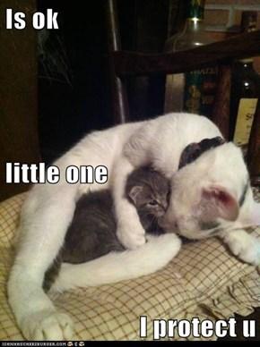 Is ok little one I protect u