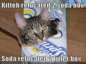 Kitteh relocated 2 soda box  Soda relocated 2 litter box