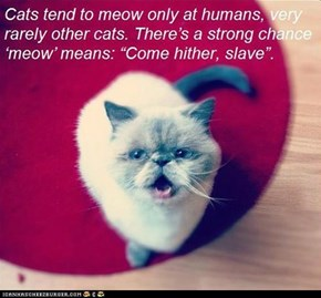 Fun Cat Facts #96