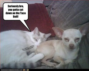 Seriously bro,  you gotta cut down on the Taco Bell!