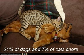 Fun Cat Facts #86