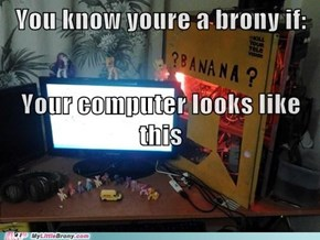 brony or?