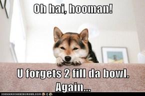 Oh hai, hooman!  U forgets 2 fill da bowl.  Again...