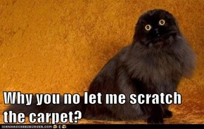 Why you no let me scratch the carpet?