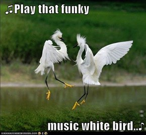 ♫Play that funky   music white bird..♪