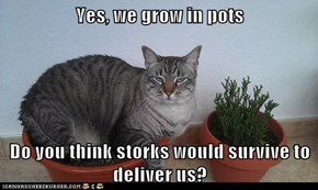 Yes, we grow in pots  Do you think storks would survive to deliver us?