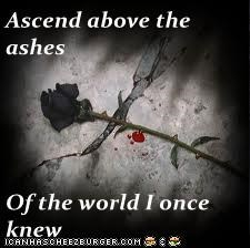 Ascend above the ashes  Of the world I once knew