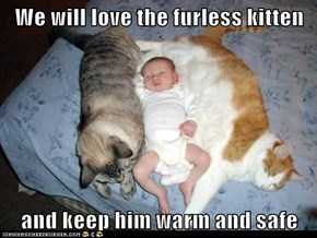 We will love the furless kitten  and keep him warm and safe