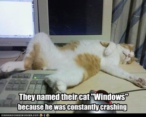 "They named their cat ""Windows"""