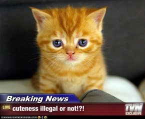 Breaking News - cuteness illegal or not!?!