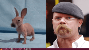 Reframe: Jamie Hyneman Is a Rabbit- Myth Confirmed
