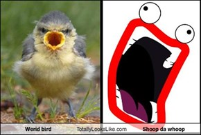 Werid bird Totally Looks Like Shoop da whoop