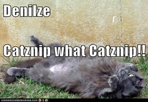 Denilze Catznip what Catznip!!
