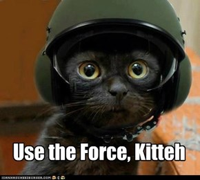 Use the Force, Kitteh