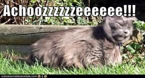 Achoozzzzzzeeeeee!!!