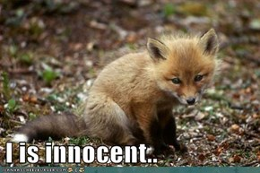 I is innocent..