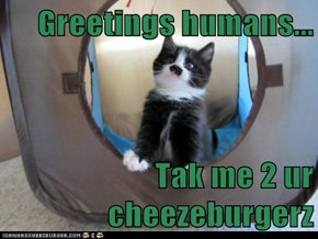 Greetings humans...  Tak me 2 ur cheezeburgerz