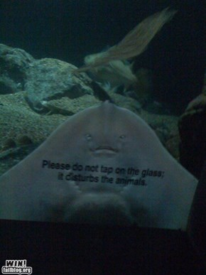 At the Aquarium WIN