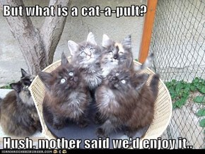 But what is a cat-a-pult?  Hush, mother said we'd enjoy it..