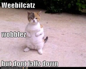 Weebilcatz wobblez but dont fallz down