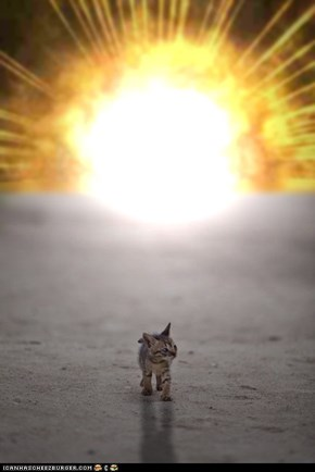 Cyoot Kitteh of teh Day: Cool Cats Don't Look at Explosions
