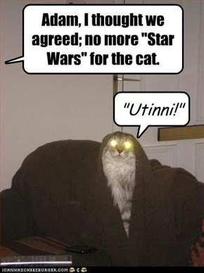 Star Wars Day: Jawa Cat!