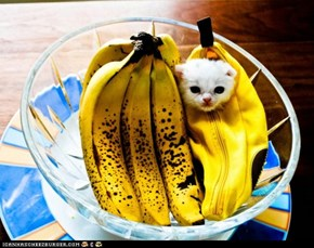 Cyoot Kitteh of teh Day: Banana Baby