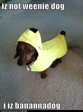 iz not weenie dog   i iz banannadog