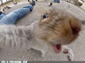 Squirrel Selfshot
