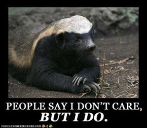 Poor Misunderstood Honey Badger