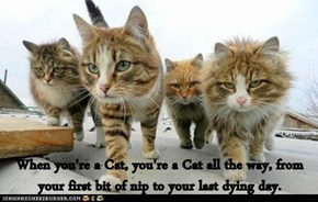 When you're a Cat, you're a Cat all the way, from your first bit of nip to your last dying day.