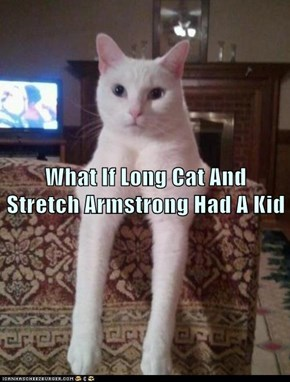 What If Long Cat And       Stretch Armstrong Had A Kid