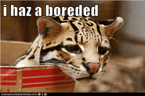 i haz a boreded