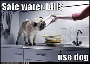 Safe water bills  use dog