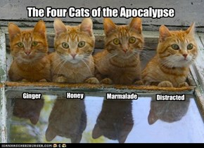 The Four Cats of the Apocalypse